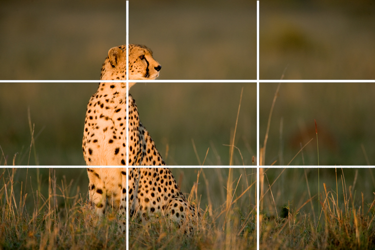 Advantages in Rule of Thirds