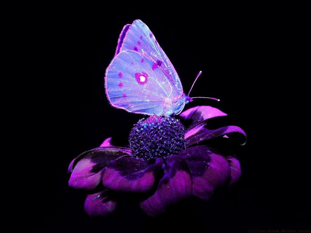 Ultraviolet Light Photography
