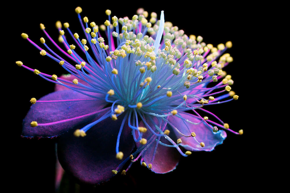 Ultraviolet Photography Concepts