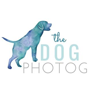 The Dog Photog